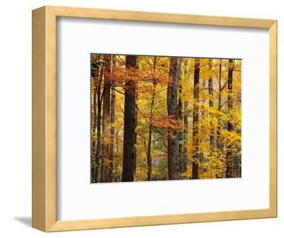 Hardwood Forest in Autumn