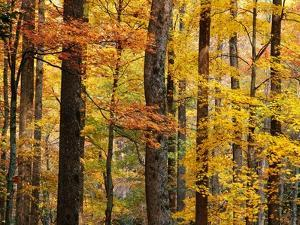 Hardwood Forest in Autumn by James Randklev