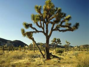 Joshua Tree National Park by James Randklev