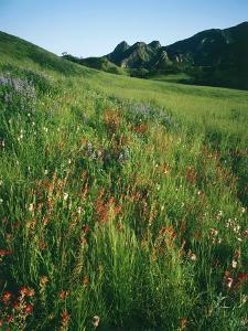 Malibu Creek State Park by James Randklev