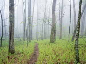 Oak Forest in Fog by James Randklev