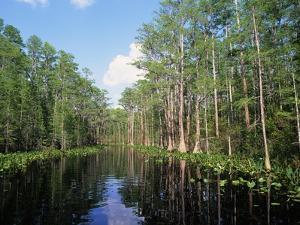 Okefenokee Swamp by James Randklev