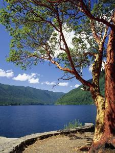 Pacific Madrone and Crescent Lake by James Randklev
