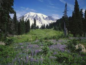 Paradise Meadow, Mount Rainier National Park by James Randklev