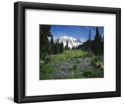 Paradise Meadow, Mount Rainier National Park