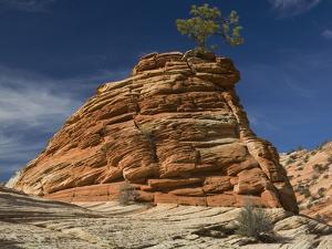 Pinyon Pine atop Sandstone Hoodoo by James Randklev