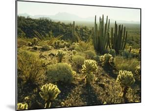 Sonoran Desert by James Randklev