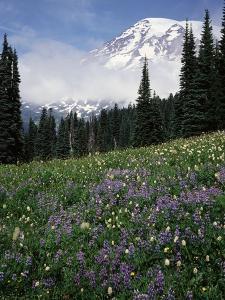 Wildflowers in Meadow Below Mt. Rainier by James Randklev
