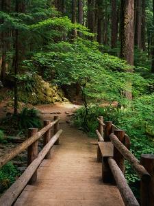 Wooden Bridge Along Sol Duc Falls Trail by James Randklev