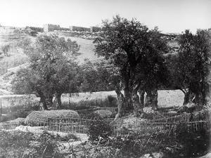 Gethsemane, 1857 by James Robertson and Felice Beato