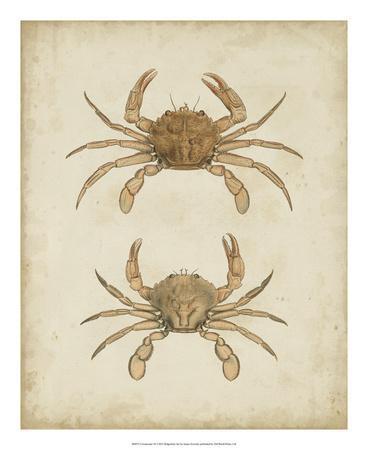 Crustaceans VI