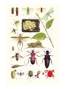 Glow-Worm, Lacewing Fly, Grasshopper,Scarlet Spider by James Sowerby