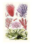 Antique Lobster III-James Sowerby-Art Print