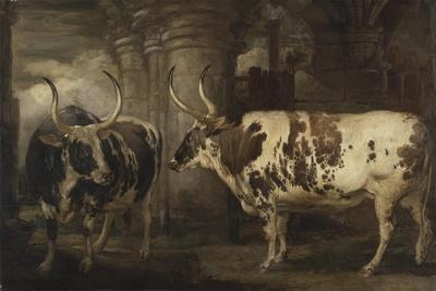 Portraits of Two Extraordinary Oxen, the Property of the Earl of Powis, 1814