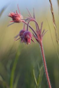 Macro Photo of Prairie Flowers in Montana by James White