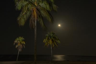 Moon over the Horizon Off the Isle of Youth, Cuba. Coconut Palms Illuminated in the Foreground by James White