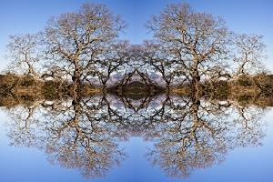 Photo Illustration of Oak Trees Reflecting Off Mountain Lake by James White