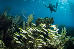 Snorkeler Swims Above a School of Reef Fish Off of Staniel Cay, Exuma, Bahamas by James White