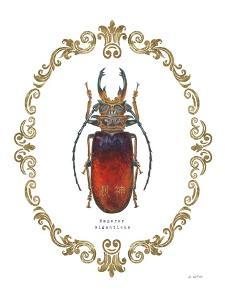 Adorning Coleoptera I by James Wiens