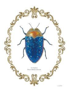 Adorning Coleoptera V by James Wiens