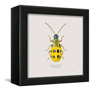 Adorning Coleoptera VII Sq Golden by James Wiens