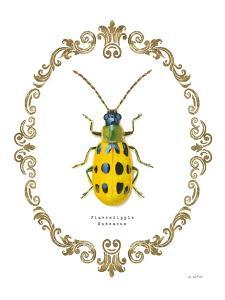 Adorning Coleoptera VII by James Wiens