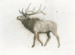 Elk by James Wiens