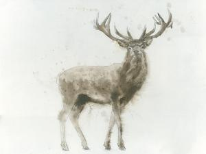 Stag by James Wiens
