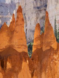 Utah, Bryce Canyon National Park, Bryce Canyon and Hoodoos Along Peekaboo Loop Trail by Jamie And Judy Wild