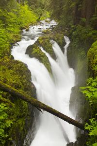 Wa, Olympic National Park, Sol Duc Falls by Jamie And Judy Wild