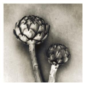 Artichoke by Jamie Cook