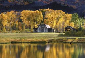 Aspen Trees with Barn by Jamie Cook