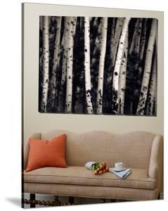 Birch Trees by Jamie Cook