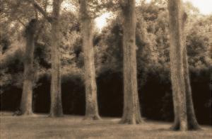 Boboli Gardens by Jamie Cook
