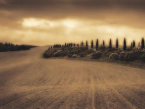Cypress Study - Tuscany by Jamie Cook