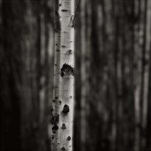 Equilibrium by Jamie Cook