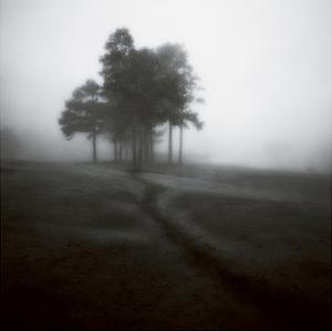 Fog Tree Study 1 by Jamie Cook