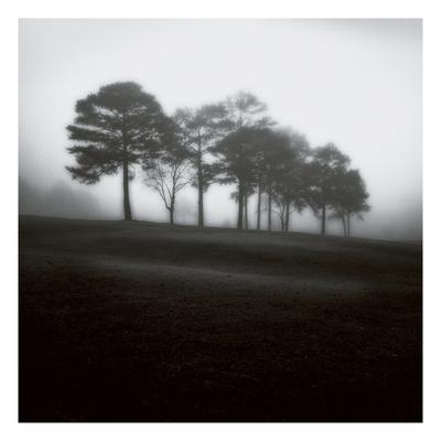 Fog Tree Study 2