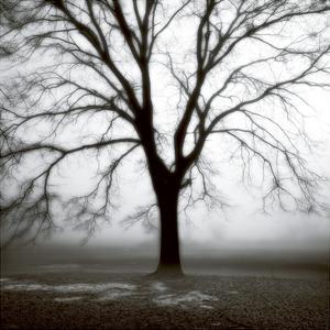 Fog Tree Study 3 by Jamie Cook