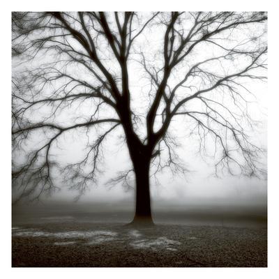 Fog Tree Study 3