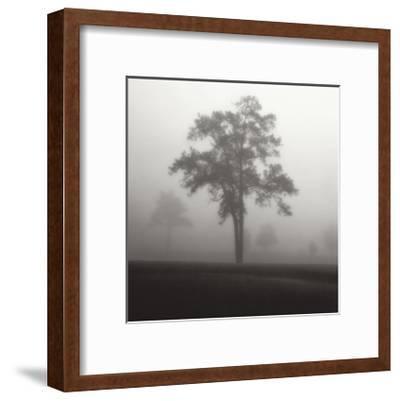 Fog Tree Study I