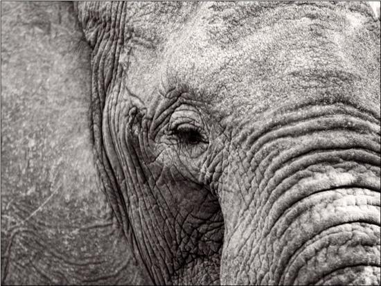 jamie-hodgson-elephant-face