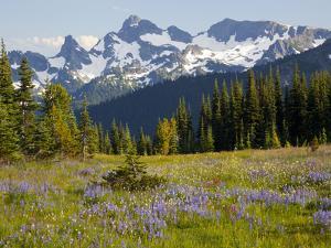 Alpine Meadow and Sarvent Glaciers, Mount Rainier National Park, Washington, USA by Jamie & Judy Wild