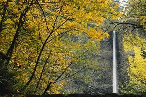 Columbia, Latourell Falls with Fall Leaves Columbia River Gorge by Jamie & Judy Wild