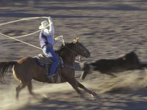 Cowboy Rides Horse in Calf-Roping Rodeo Competition, Big Timber, Montana, USA by Jamie & Judy Wild