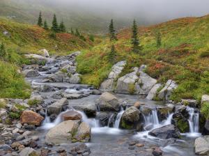Edith Creek, Mt. Rainier National Park, Washington, Usa by Jamie & Judy Wild