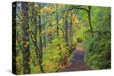 Forest Trail, Silver Falls State Park, Oregon, USA