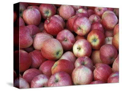 Freshly Picked Gala Apples, Monitor, Washington, USA
