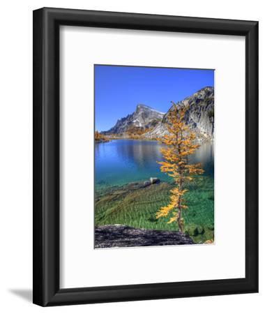 Golden Larch Tree, Enchantment Lakes, Alpine Lakes Wilderness, Washington, Usa