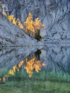 Golden Larch Trees, Enchantment Lakes, Alpine Lakes Wilderness, Washington, Usa by Jamie & Judy Wild